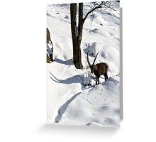 Ibex Itinerary Greeting Card