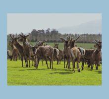 So Curious - Deer - Southland Kids Tee