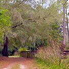 Florida Path by dez7