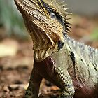 Water Dragon Lizard by Paul Sparrow