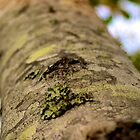 Tree Bark by Parker Bass
