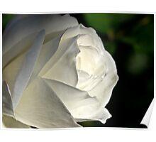 Radiant white Poster