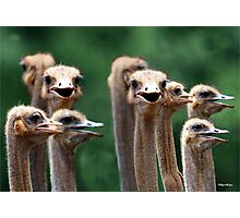 I SAY NO 6! - AT THE OSTRICH RACE - Struthio camelus Photographic Print