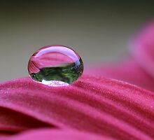 Water drop on flower... by Glenda Williams
