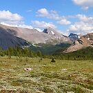 Sunshine meadows panorama by zumi