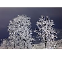 Stille Nacht (Silent Night) Photographic Print