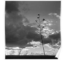 Sonoran Desert Sunset Poster