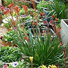 Kangaroo Paws In Bloom by joycee