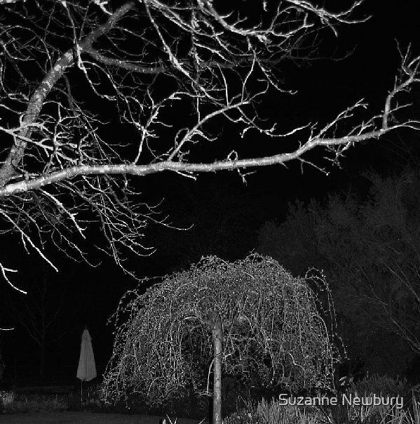 LB Gardens by night by Suzanne Newbury