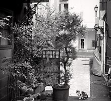 Ginza alley cat - Japan by Norman Repacholi