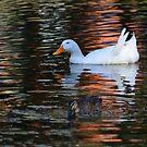 ducks by Loreto Bautista Jr.