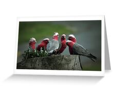 Gossiping Galahs Greeting Card