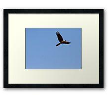 Juxtaposition of Flight  Framed Print