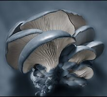 Shelf Fungus Study No 10 by Wayne King
