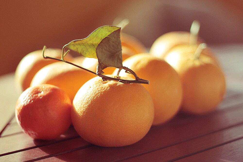 oranges family by Caterina Neri