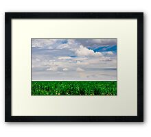 Young Cornfield Framed Print