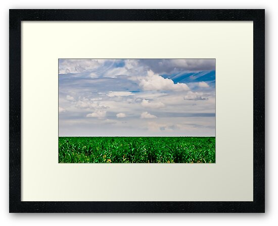Young Cornfield by Riaan Roux