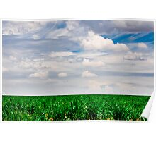 Young Cornfield Poster