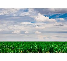 Young Cornfield Photographic Print