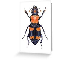 American Burying Beetle Greeting Card