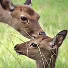 A Tender Moment by Kathy Baccari