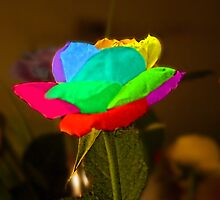 Multi coloured Rose by AmandaJanePhoto