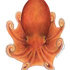 Northern Octopus (Eledone cirrhosa) by Tamara Clark