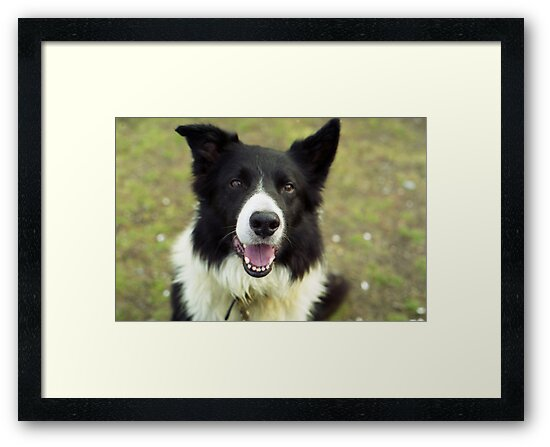 My happy lad Indy. by Michael Haslam