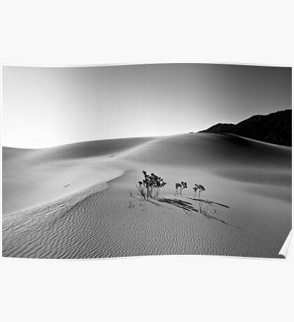 Isolated Life - Death Valley National Park, California Poster