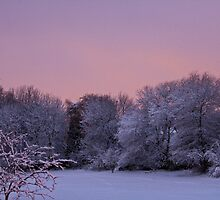 Snow Scene At Sunrise by David Pringle