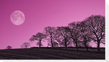 Tree line full moon by kevindobie