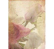 Love Letter from France Photographic Print