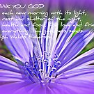 Appreciation by Tammy Devoll