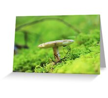 poisonous toadstool Greeting Card