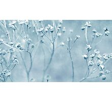 Pastel Blue Photographic Print