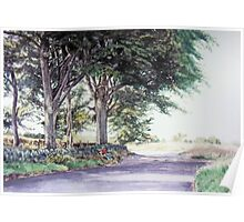 A seat in the shade of majestic trees Poster