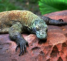 Komodo Dragon by chilipenguin