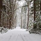 Winter Wonderland by Barb White