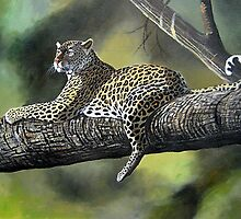 Leopard relaxed on a tree branch by Mutan