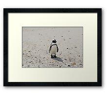 The African Penguin Framed Print
