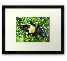 Macro Insects Framed Print