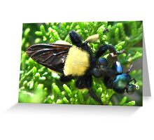 Macro Insects Greeting Card