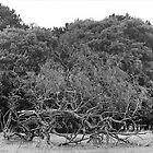 Phoenix Park, Dublin - Fallen Tree by Dave  Kennedy