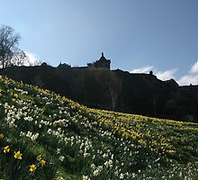 White and golden daffodils by Pete Johnston