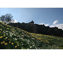 White and golden daffodils Photographic Print