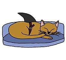 Catfish - Parody Photographic Print