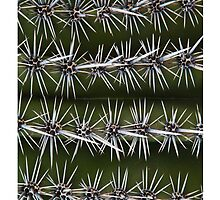 Spikes - Saguaro Cactus by Tim McGuire