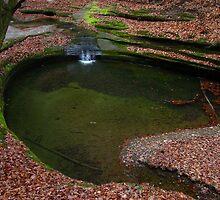 Above the Green Pool  by Gu88dek