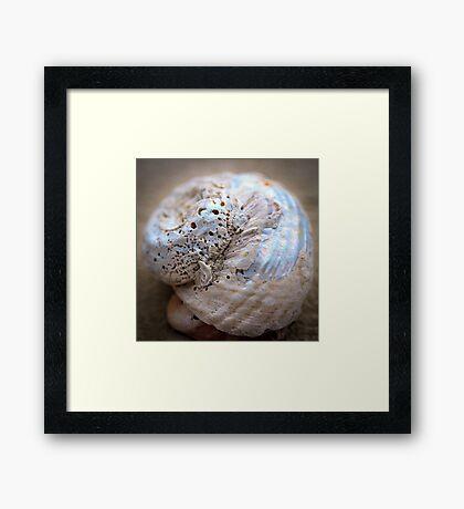 she sells - sea shells Framed Print