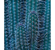 Cactus Detail 007 by Tim McGuire